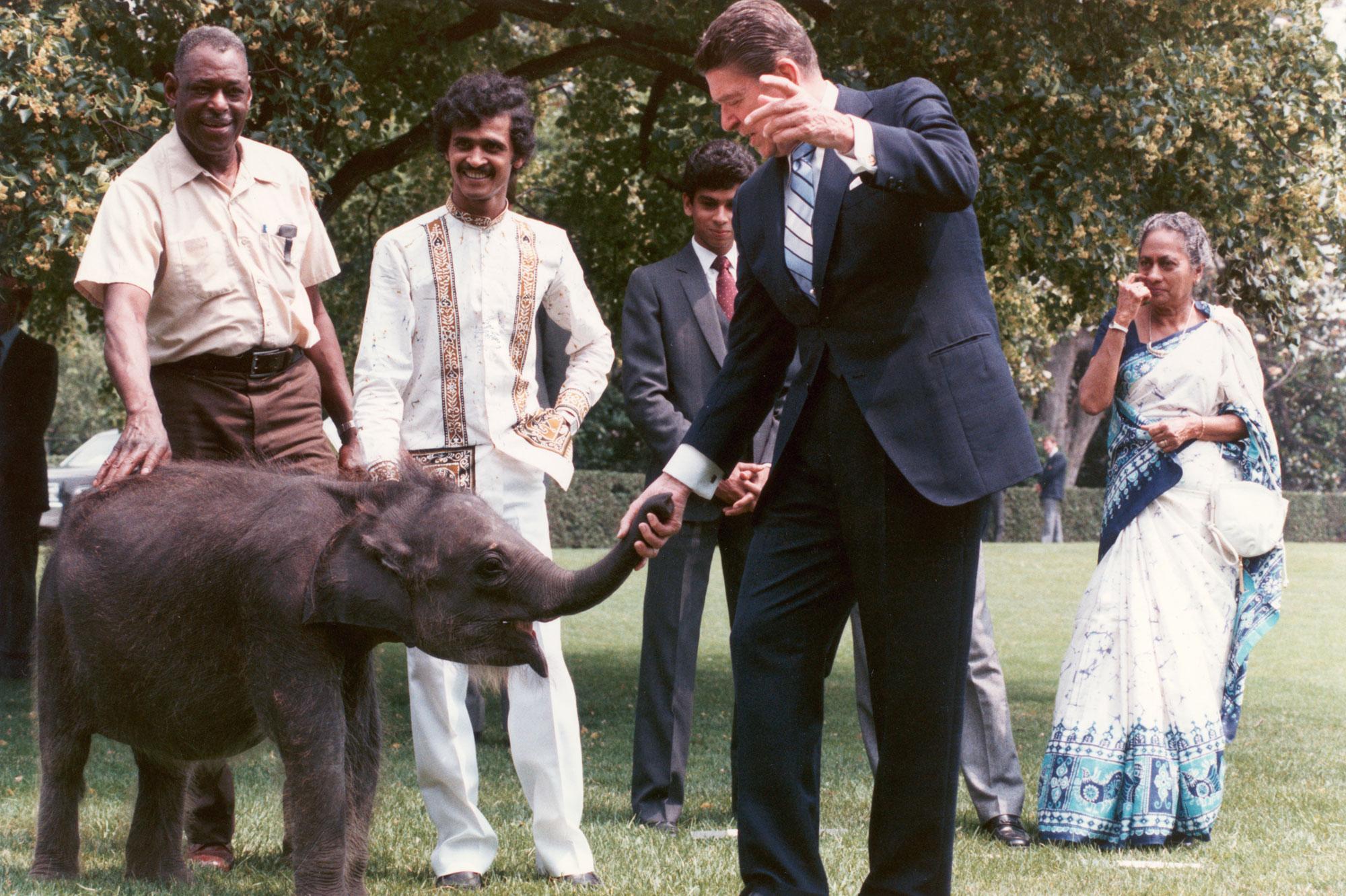 Ronald Reagan et Jayathu l'éléphantelle