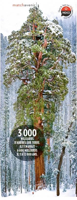 Hyperion, le séquoia géant