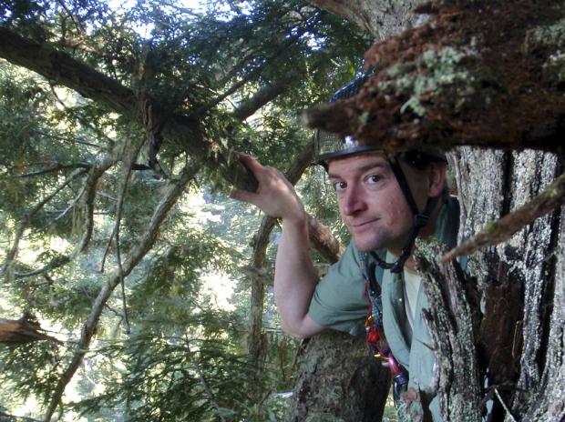 Steve Sillett en pleine ascension.