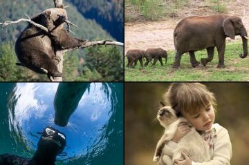 Animal Story - Votez pour le diaporama de la semaine