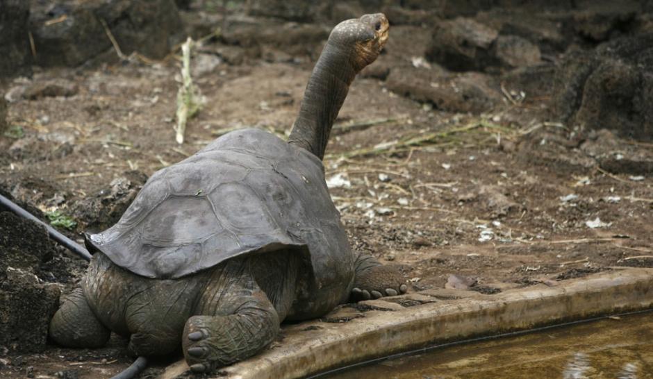 La mort solitaire de George la tortue, dernière de son espèce