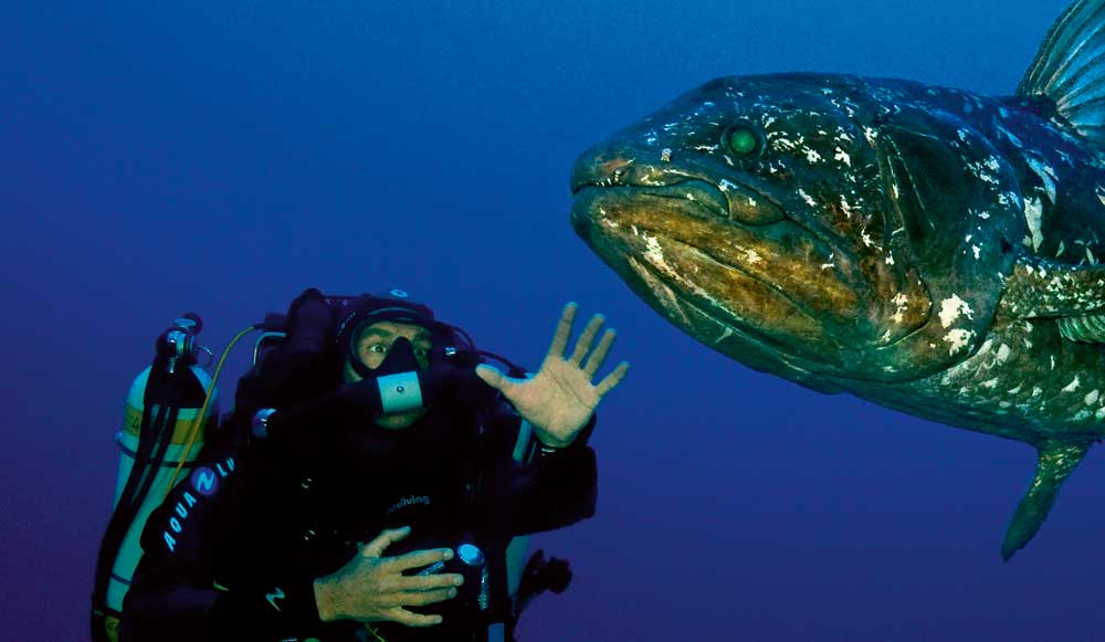 Tête-à-tête avec le plus vieux poisson du monde Латимерия