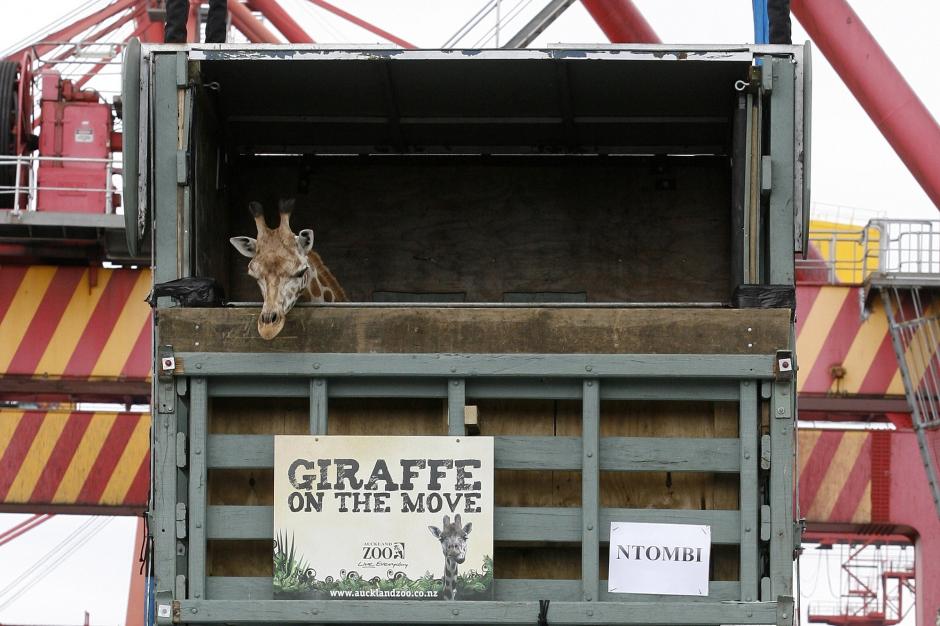 Choc en afrique du sud une girafe tu e par un pont sur l - Office du tourisme afrique du sud paris ...
