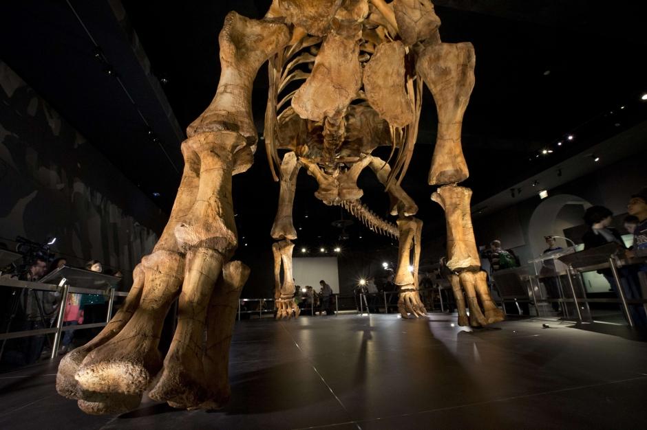 Le plus grand dinosaure du monde entre au mus e for Les plus grands musees du monde