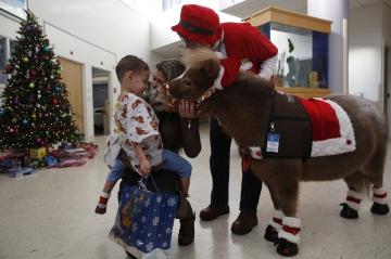 En images - Les mini-chevaux, visiteurs insolites à l'hôpital