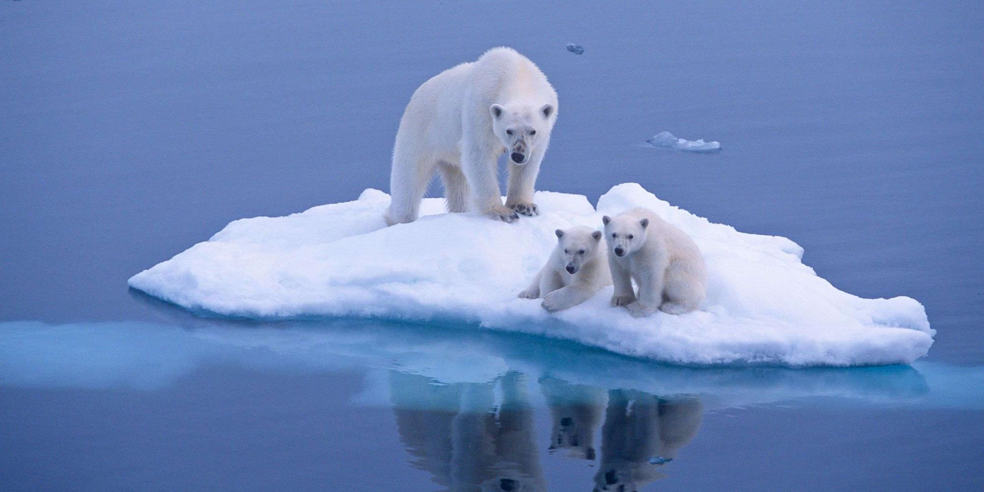 Image Result For Polar Bear Club