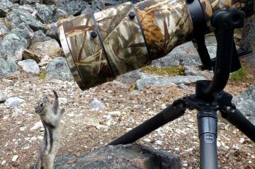 Rétro 2014 - Animal Story - Tu veux ma photo?