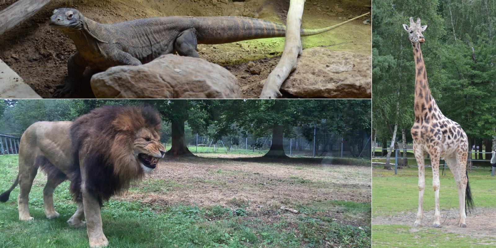les zoos de france thoiry l tat sauvage dans les yvelines ForZoo En Yvelines