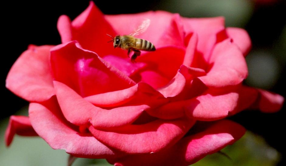 Jardiner colo 5 conseils pour cultiver bio for Conseil pour jardiner